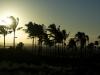 backlit palms.jpg