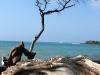 beach tree.jpg