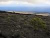 bush in lava.jpg