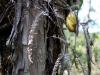 ferny tree.jpg