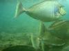 fisheees.jpg