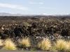 roadside lava.jpg