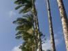 tall palms.jpg