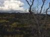 tree in lava.jpg